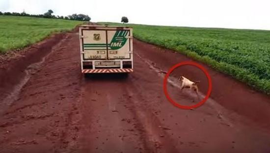 5個感人催淚的狗狗故事,請備好紙巾!