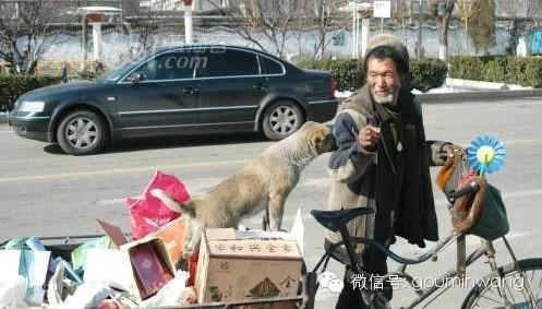 催人淚下:一位老人與狗的感人故事
